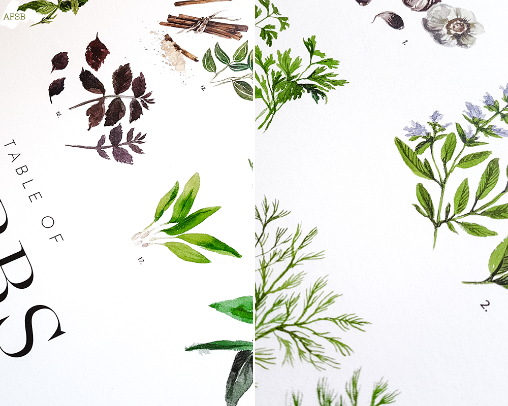 Poster Store - Affiche Herbs