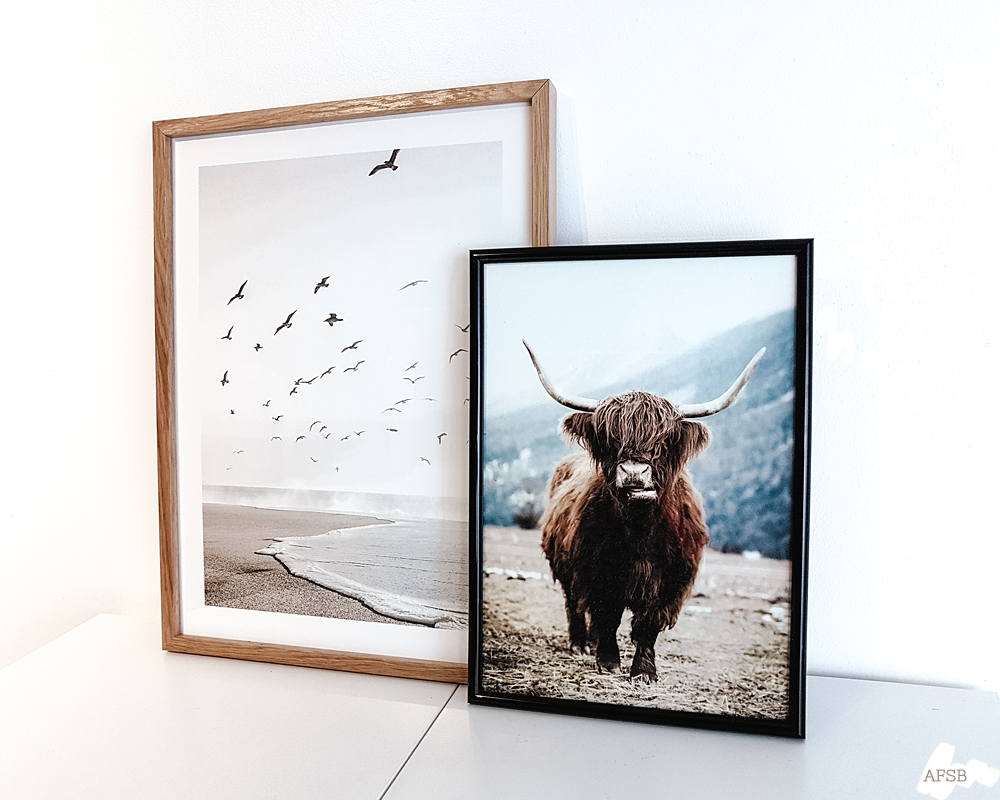 Poster Store - Affiches Plage calme & Highland cow